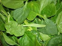 Larger_spinach